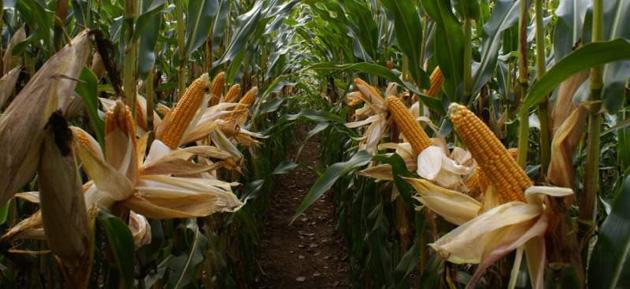 Řízení bezpečnosti potravin - ISO 22000