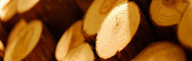 V současnosti se připravuje nová norma určená ke sledování dřeva jako trvale udržitelného zdroje