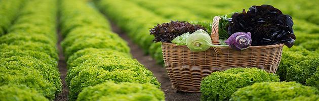 Zdravé potraviny - z farmy až na talíř